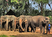 Деревня слонов Хуа Хин