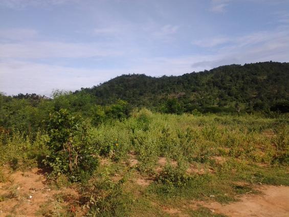 Купить землю в Хуа Хине для строительства поселка