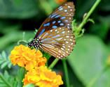 Парк бабочек Хуа Хин (Panee Butterfly Farm)